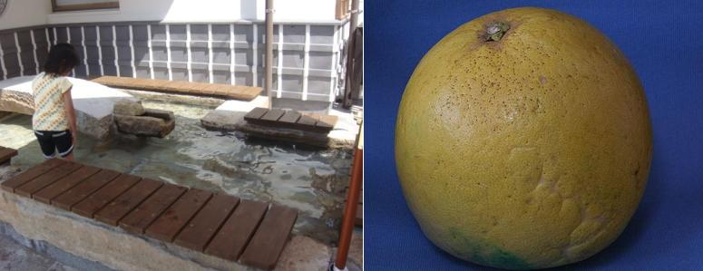 """Ashiyu"" foot bathing and ""Banpeiyu"" citrus."