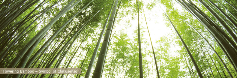 en_img_about1 bamboo