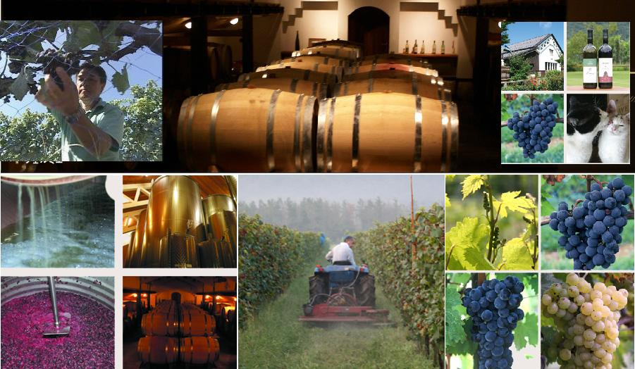 wine production process